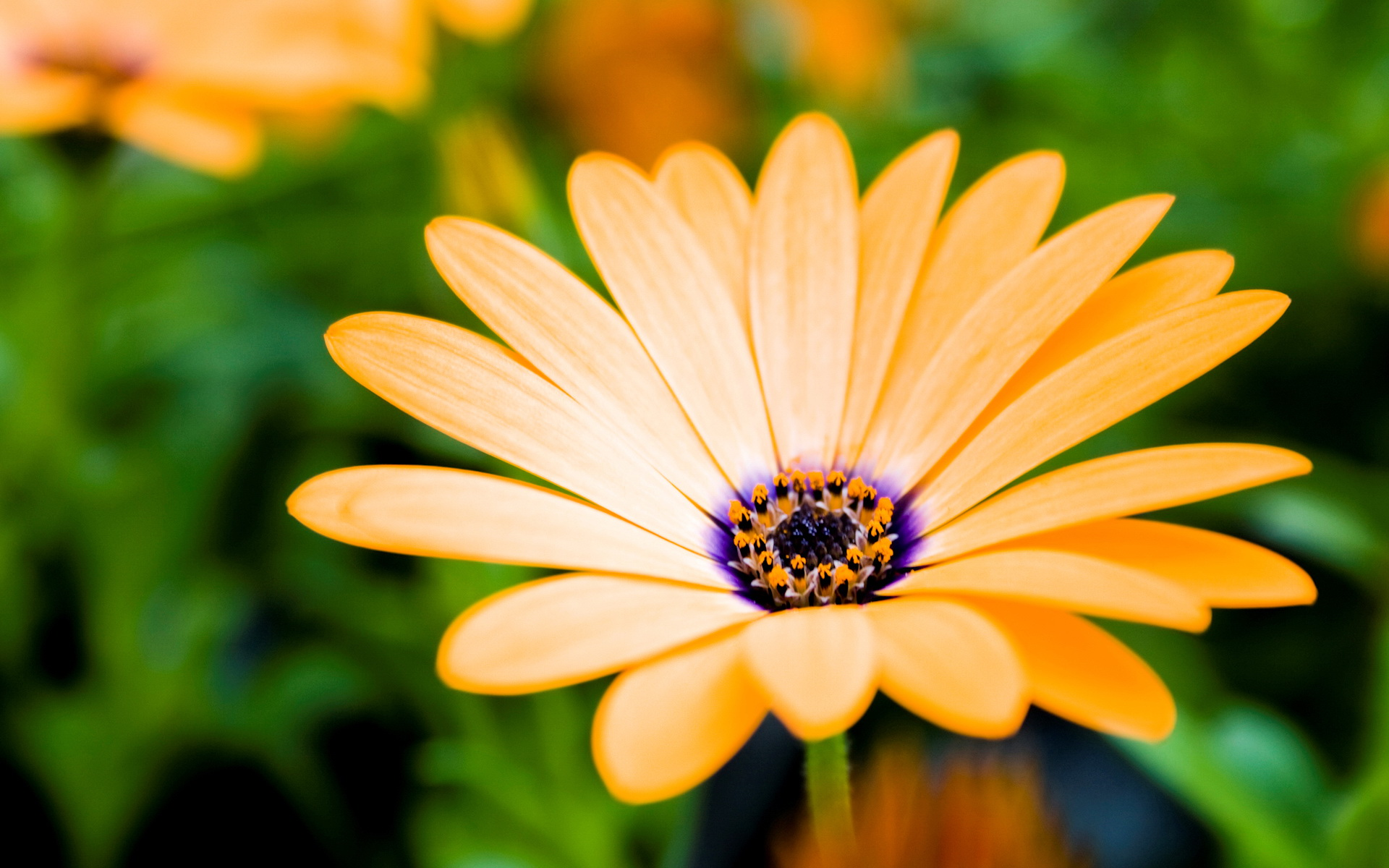 Spring flower free desktop wallpapers for widescreen hd and mobile flowers wallpapers mightylinksfo Gallery