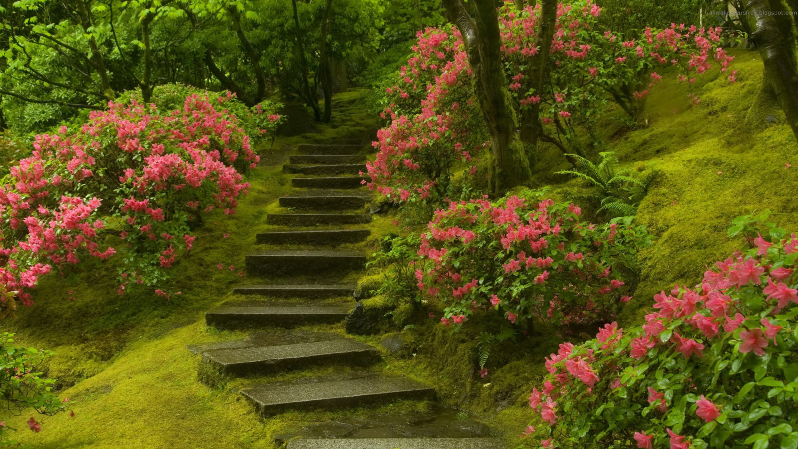 Garden Wall Papers Japanese Zen Wallpaper Tea