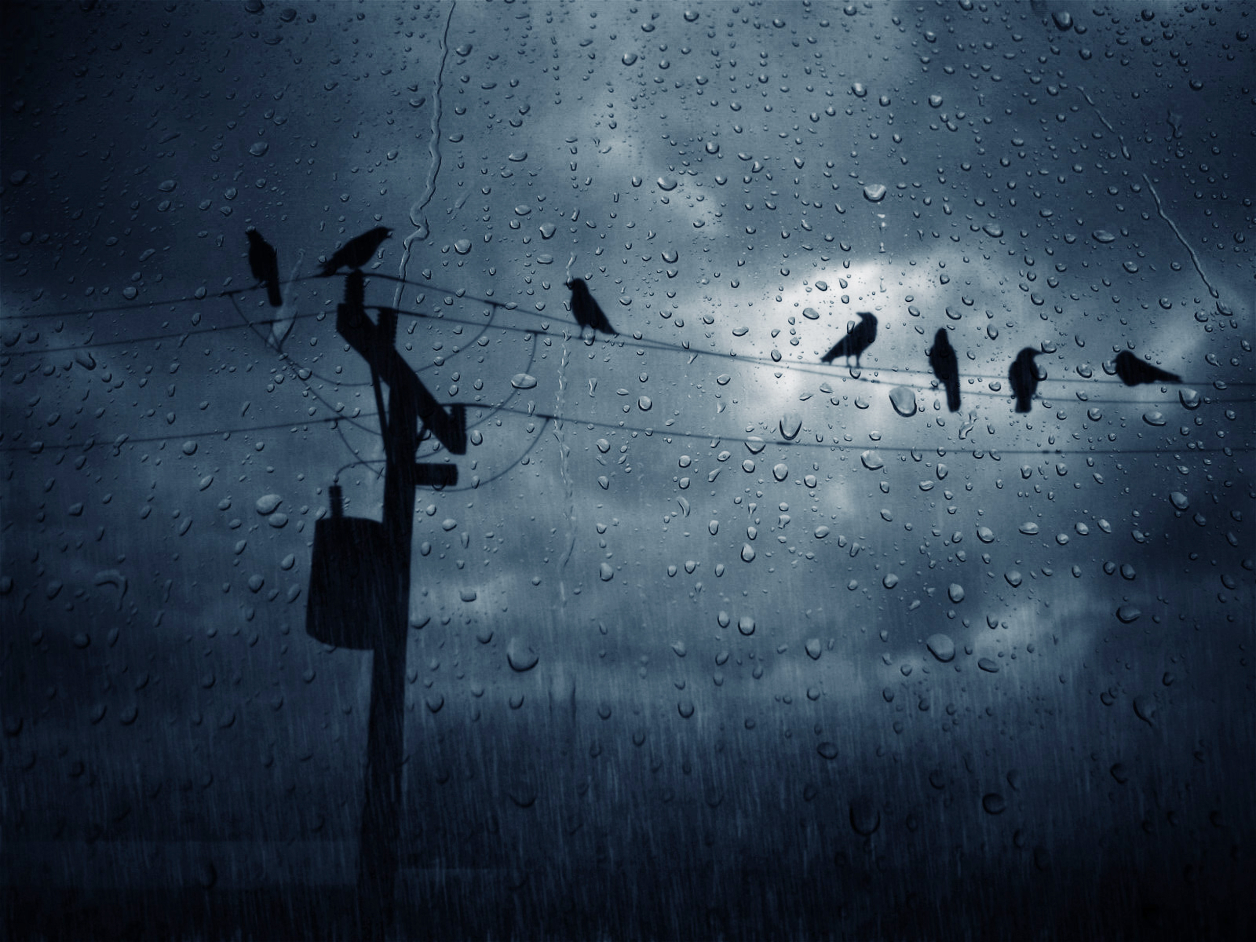 Rain and birds on the wire free desktop wallpapers for rain wallpapers voltagebd Image collections