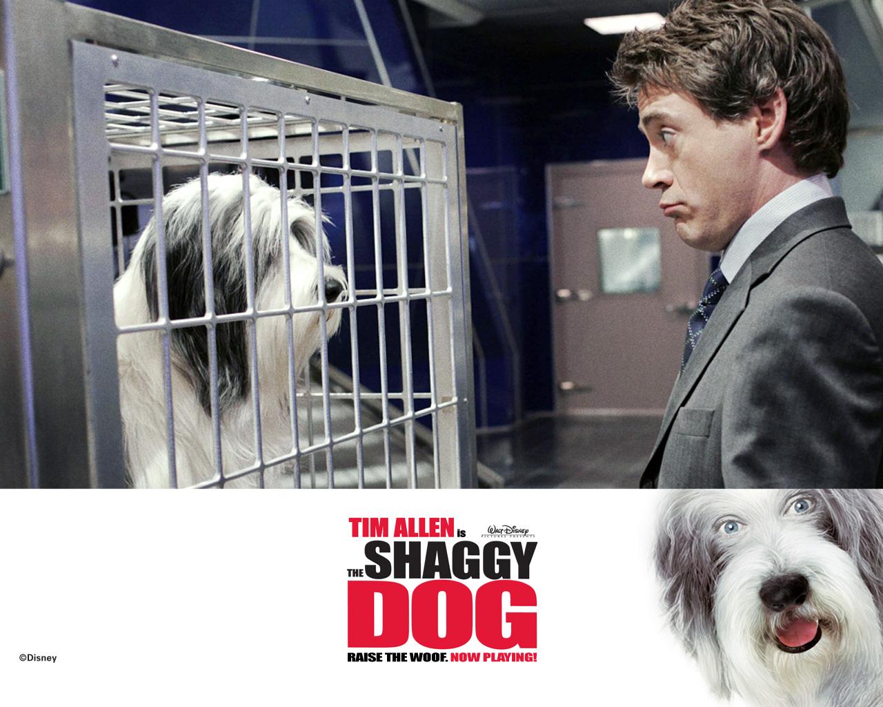 「the shaggy dog 2006」の画像検索結果