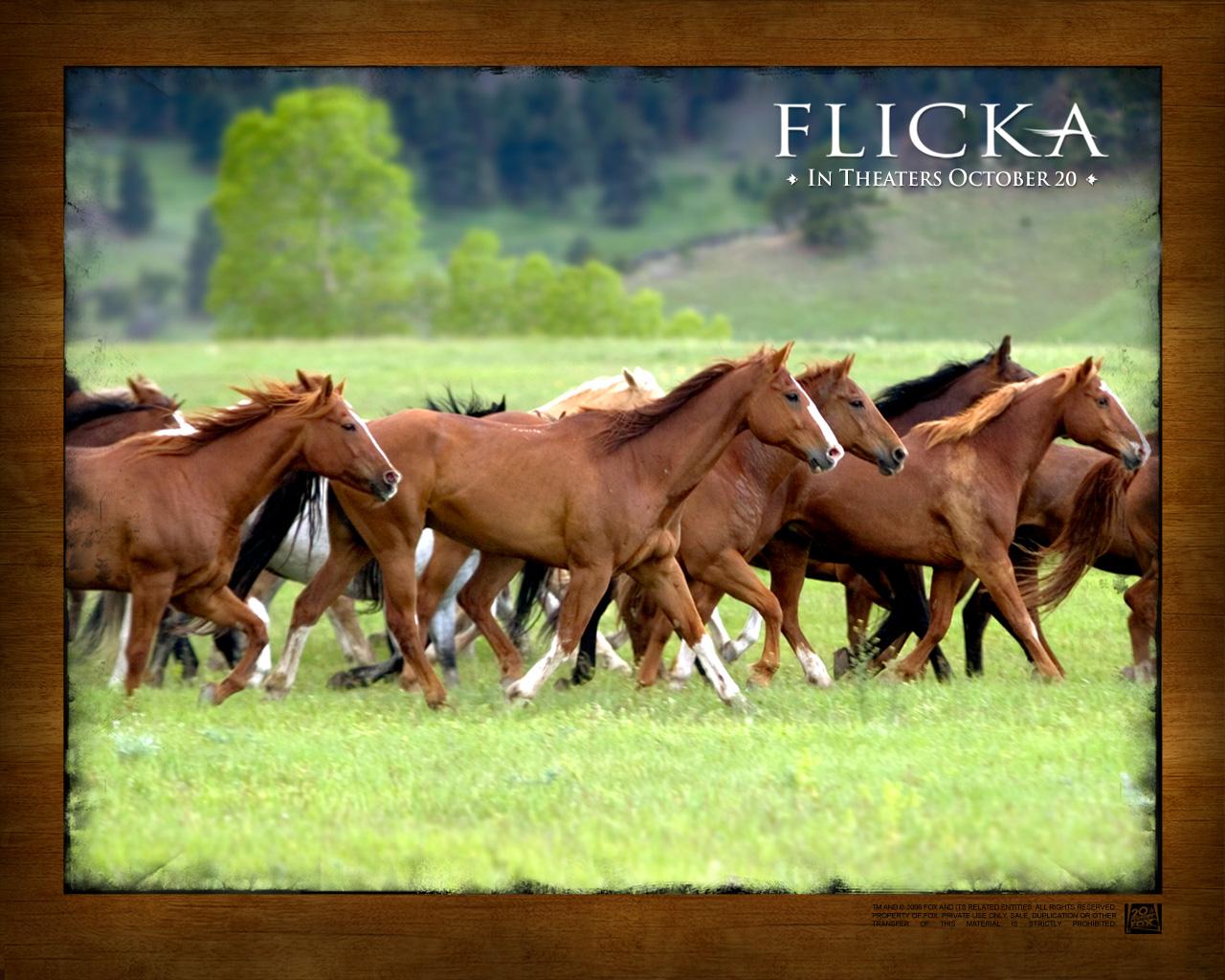 Flicka Flicka-002