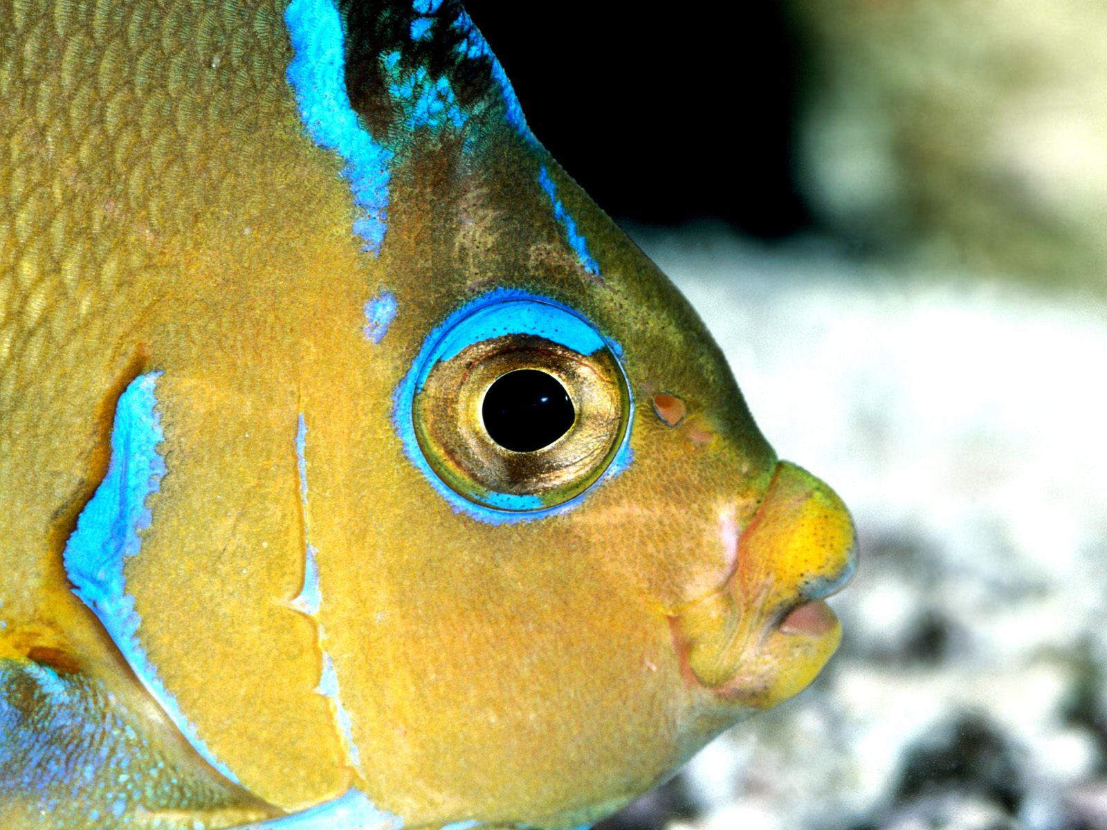 Желтая Рыба макро  № 1088214 без смс
