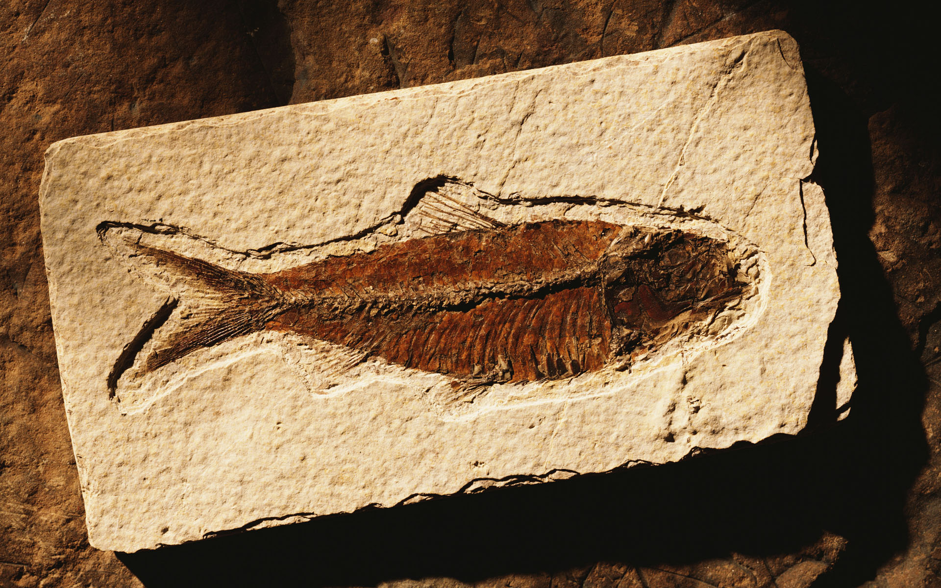 Коричневая рыбка 800x600.
