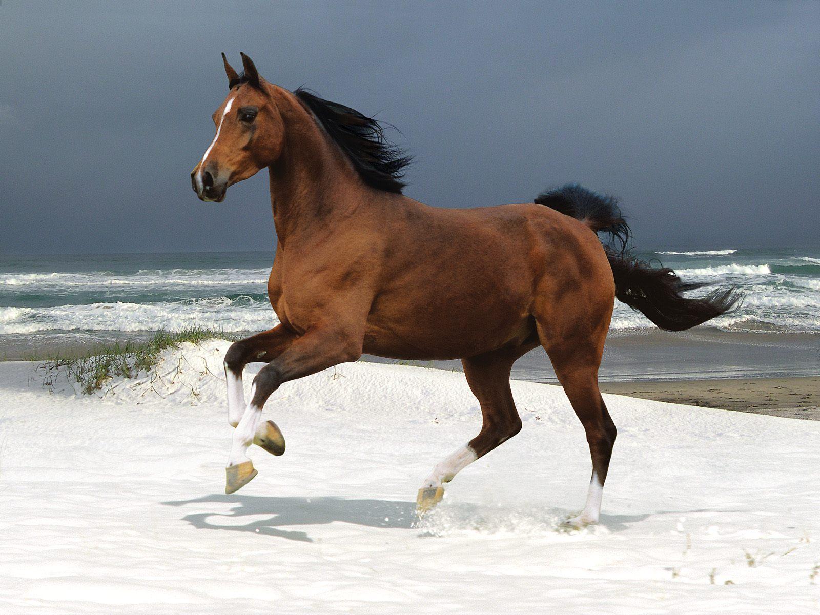 brown horse running | free desktop wallpapers for widescreen, hd