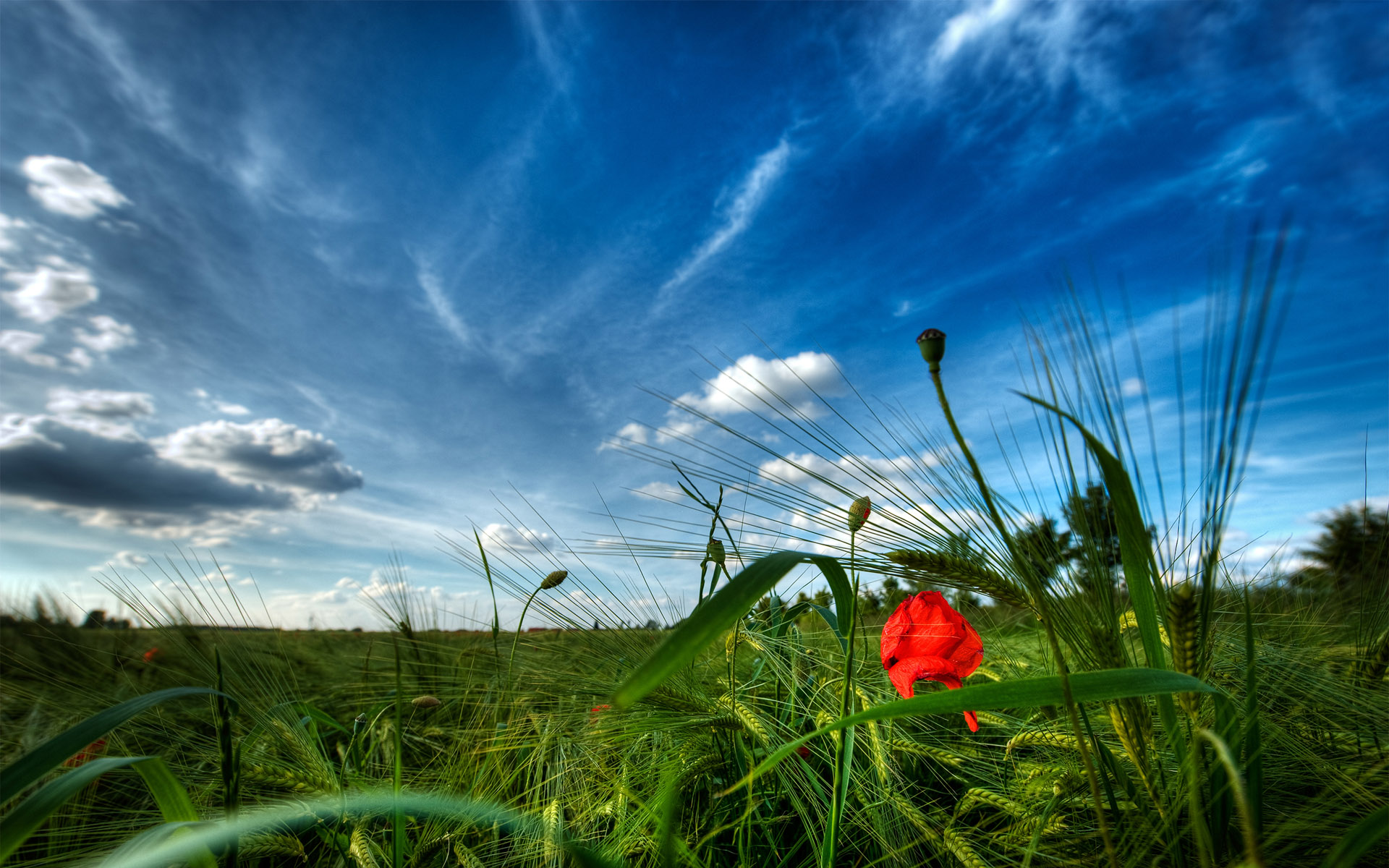 nature background wallpaper photo wallpapers meadow 1920x1200