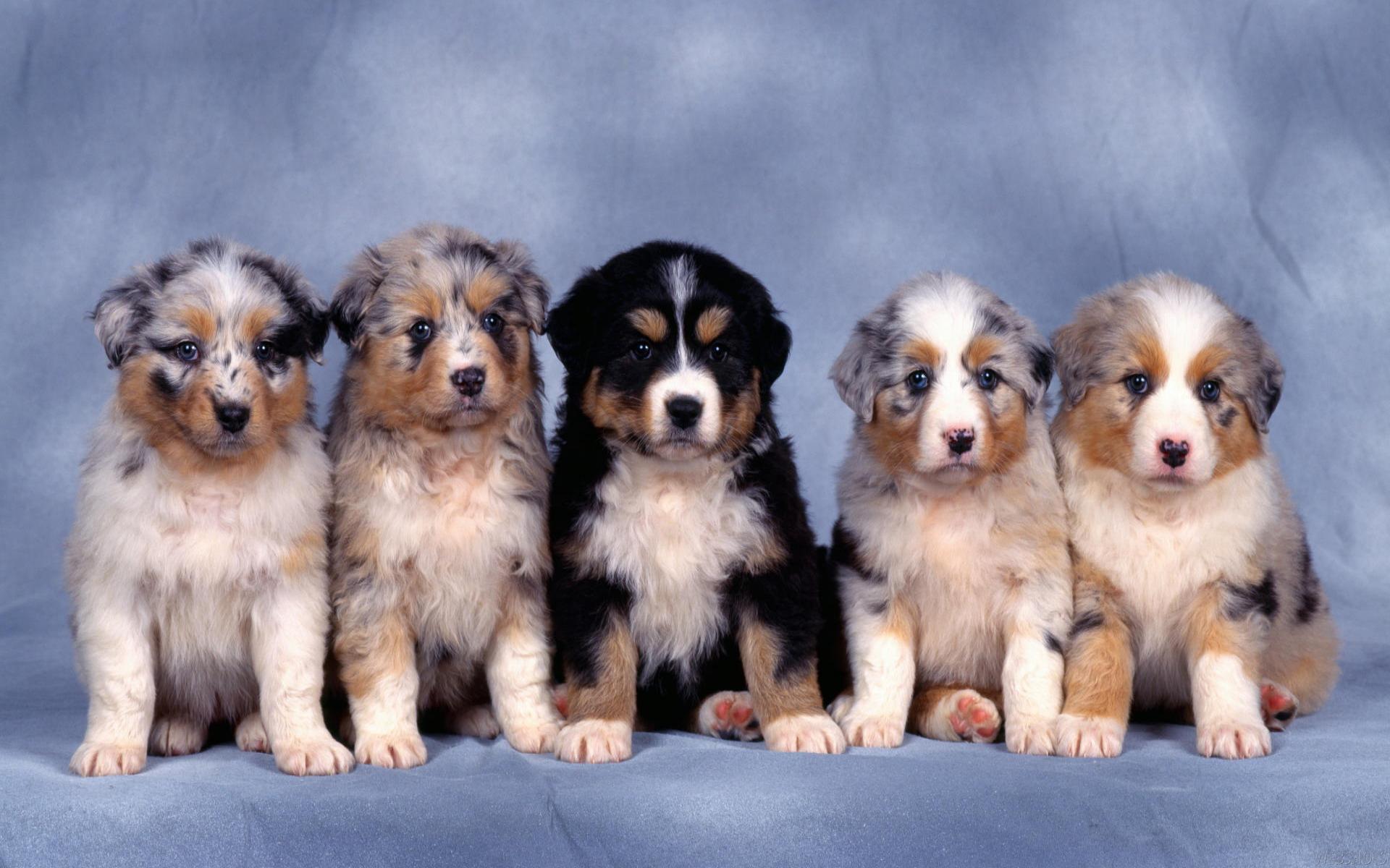 cute dogs wallpaper 92372