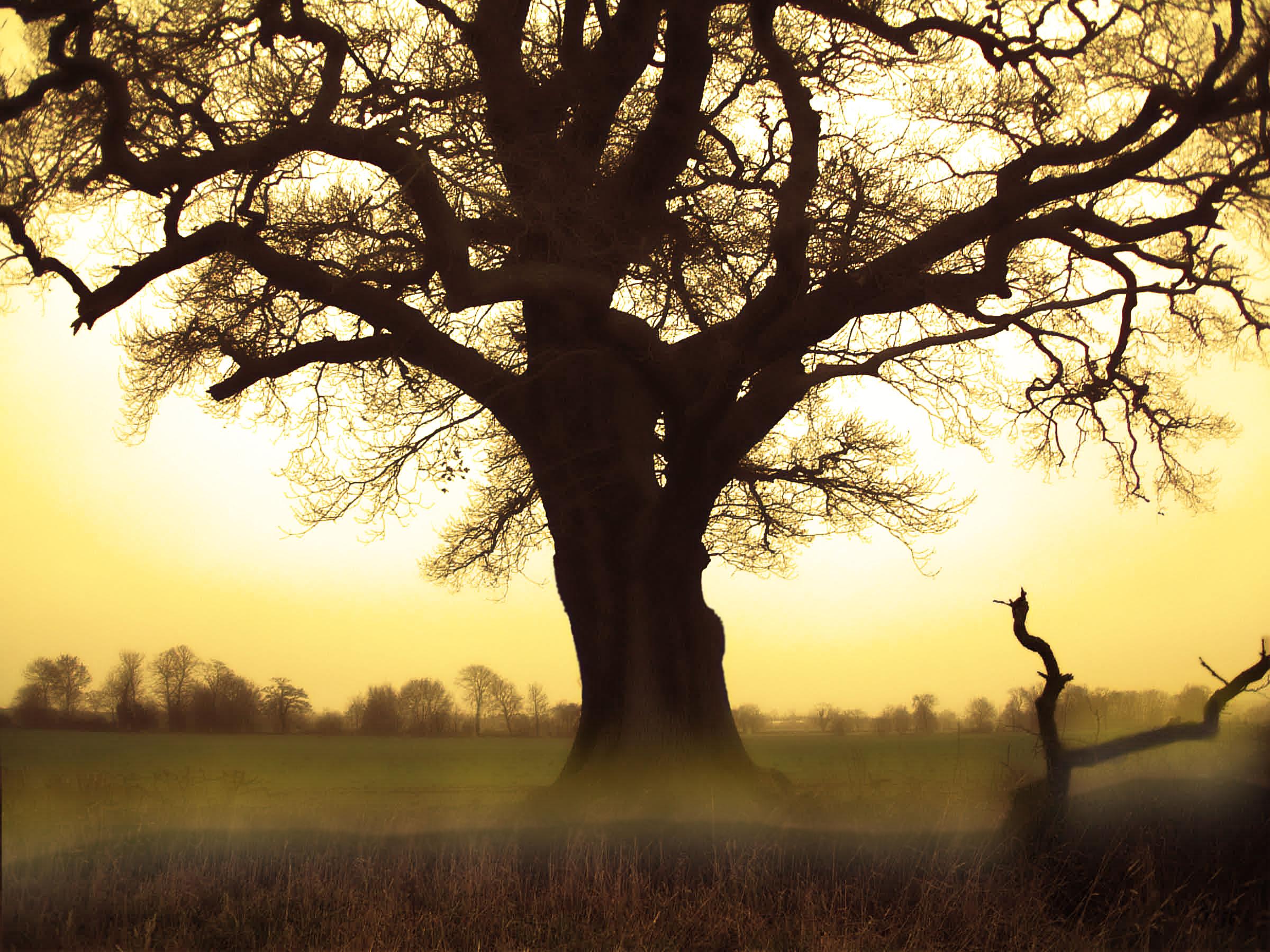 sun fog sunrise trees - photo #21
