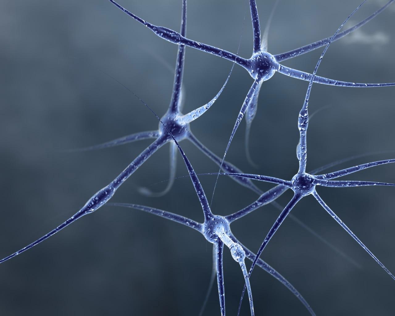 Нервные клетки восстанавливаются секс 13 фотография