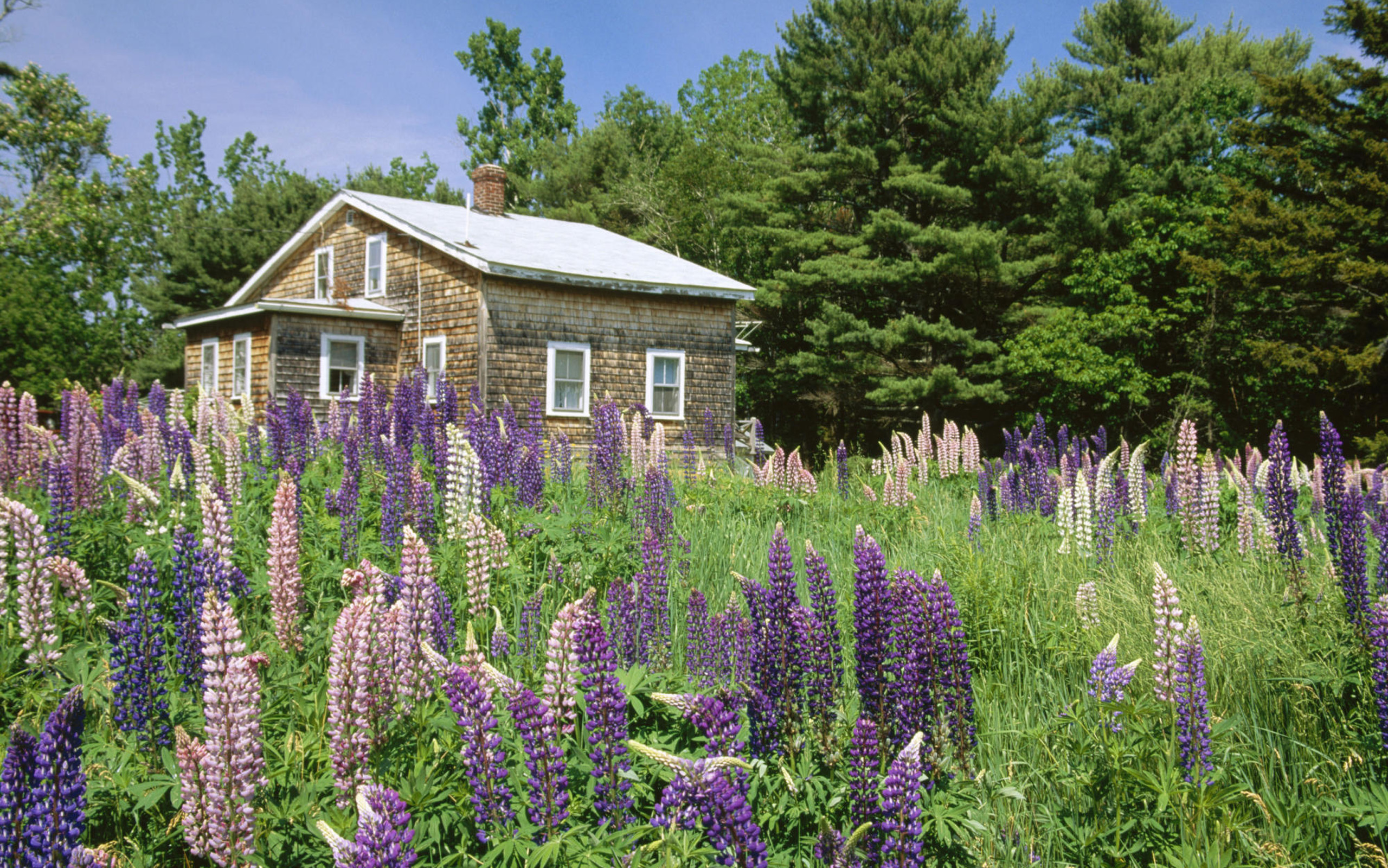 Meadow with flowers and house - The mobile home in the meadow ...