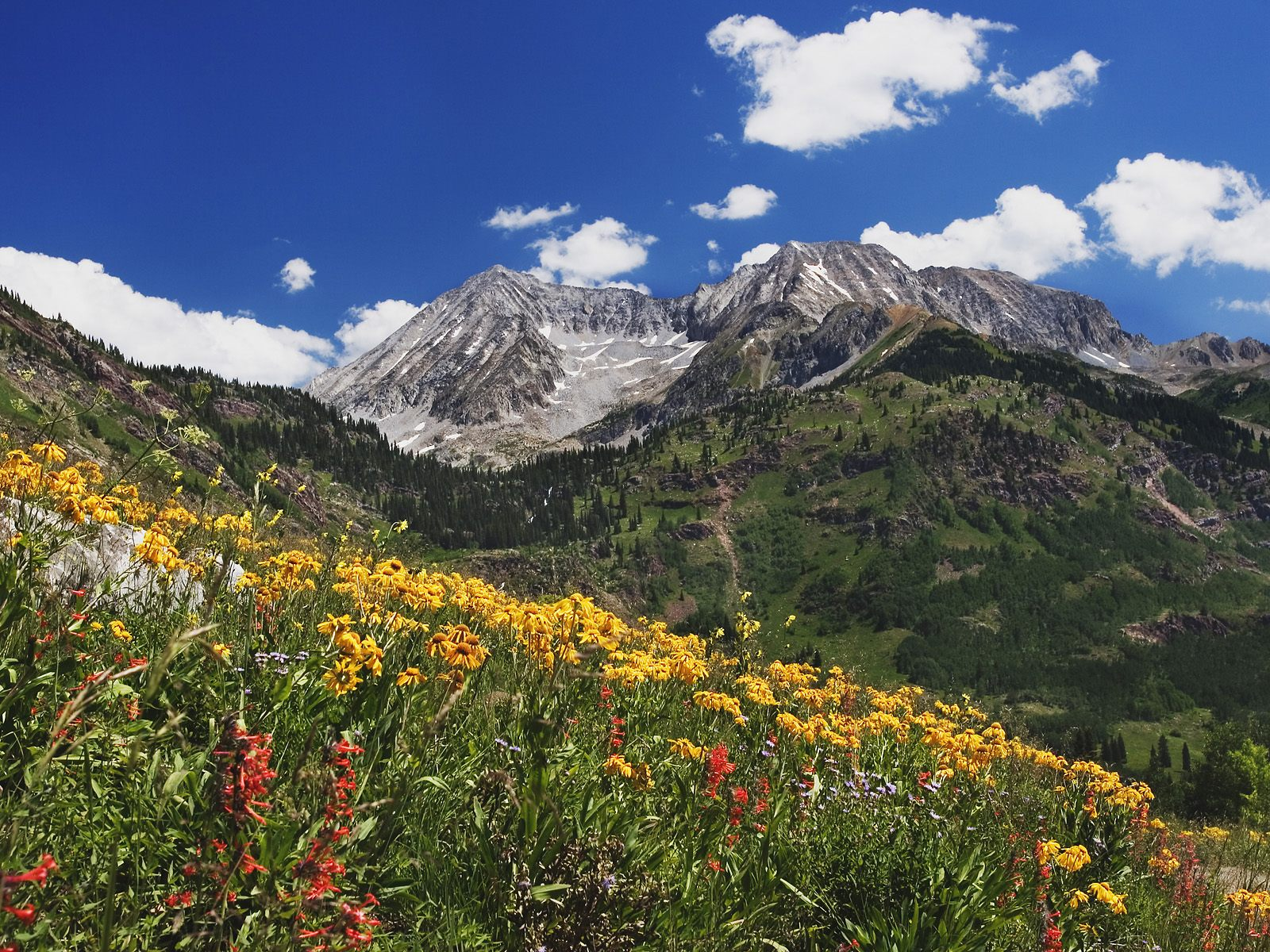 2 Spring Wildflowers in Alpine Meadow at Lead King Basin in Marble Colorado Miranda Cosgrove Fakes Pics. Jun25. Miranda Cosgrove Fakes Pics