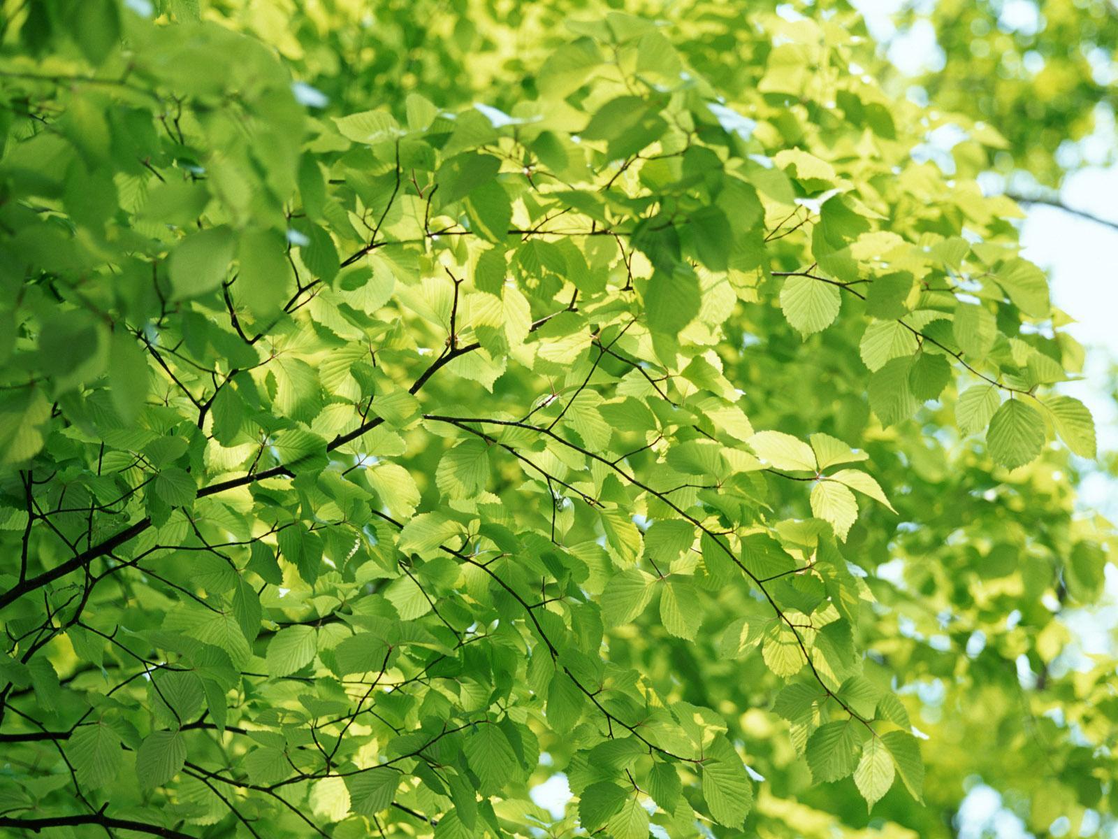 Арка из зеленых листьев загрузить