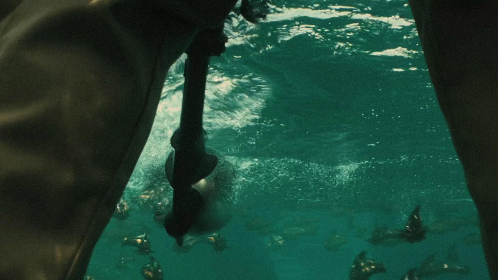 top piranha wallpaper movie wallpapers