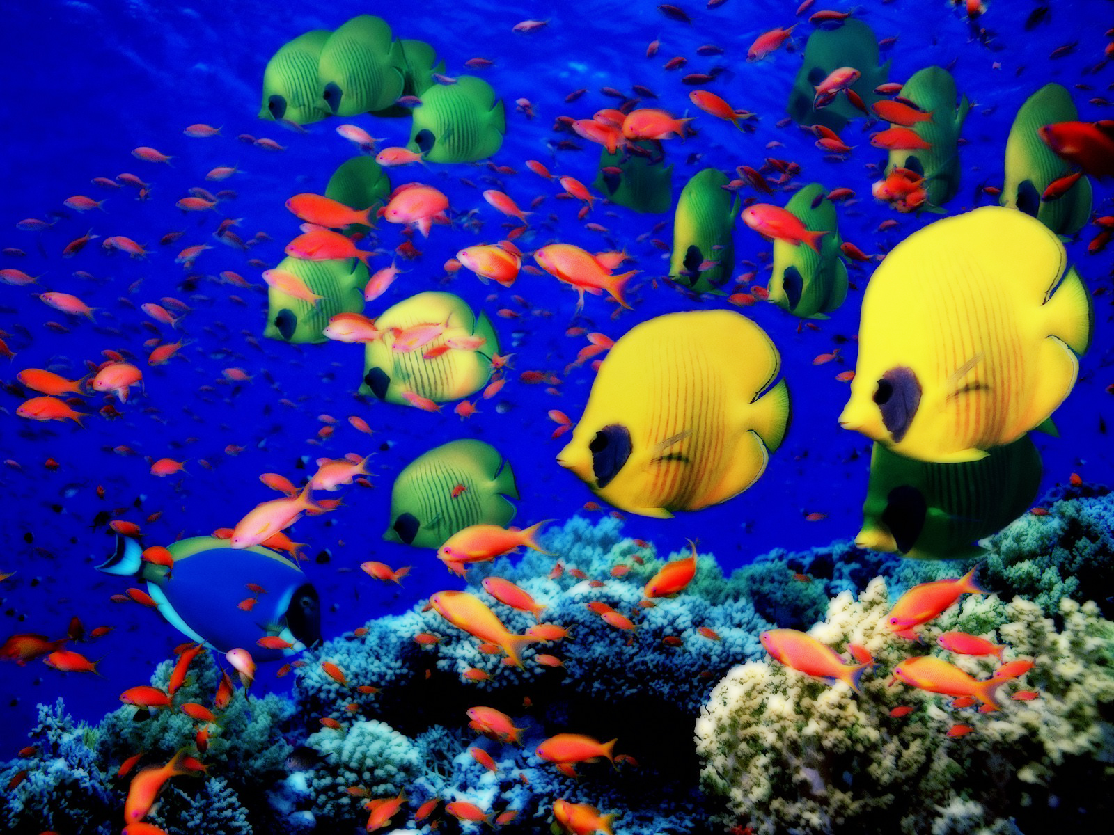 Pictures Of Animals Underwater