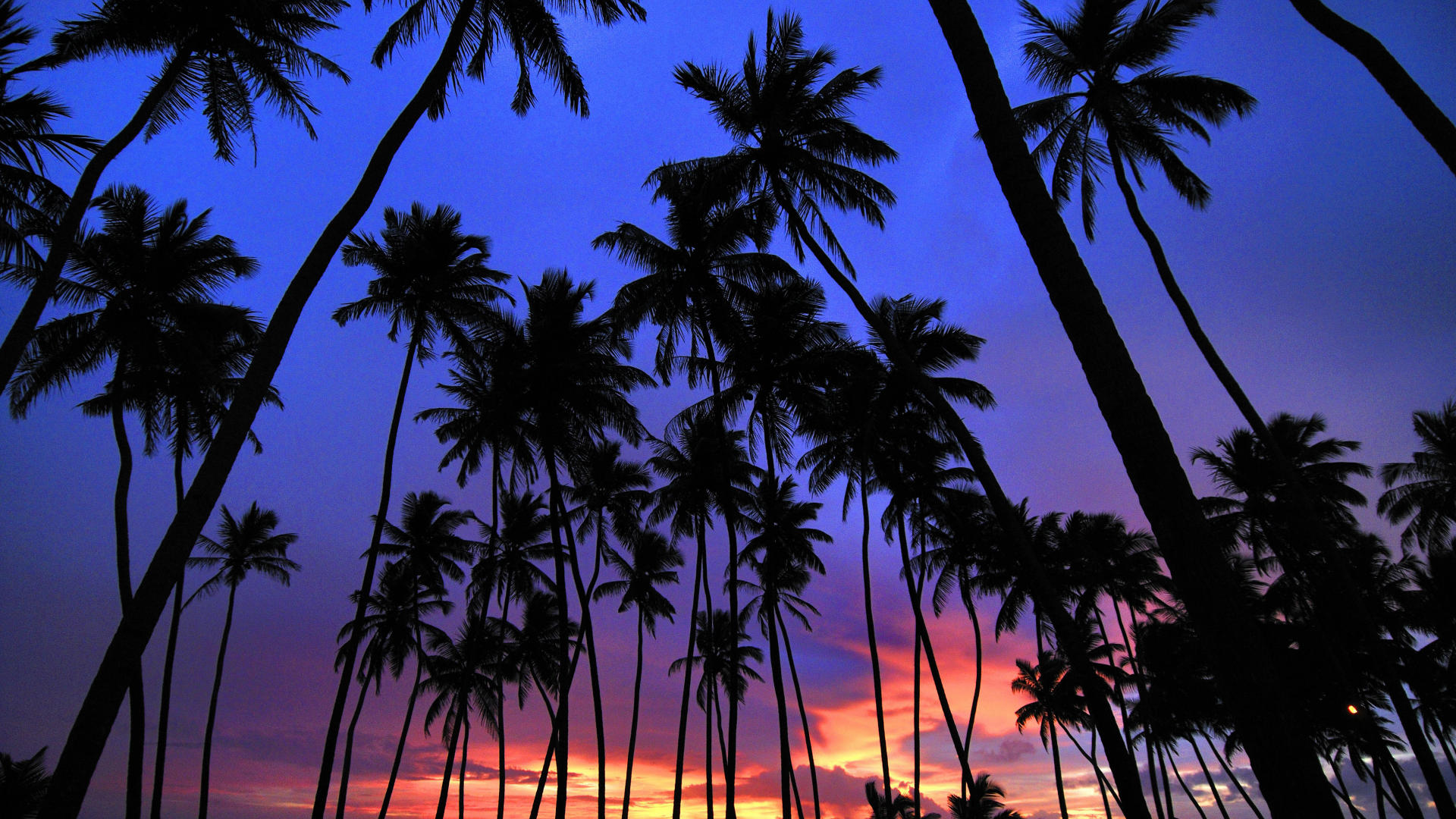 palms free desktop wallpapers for widescreen hd and mobile