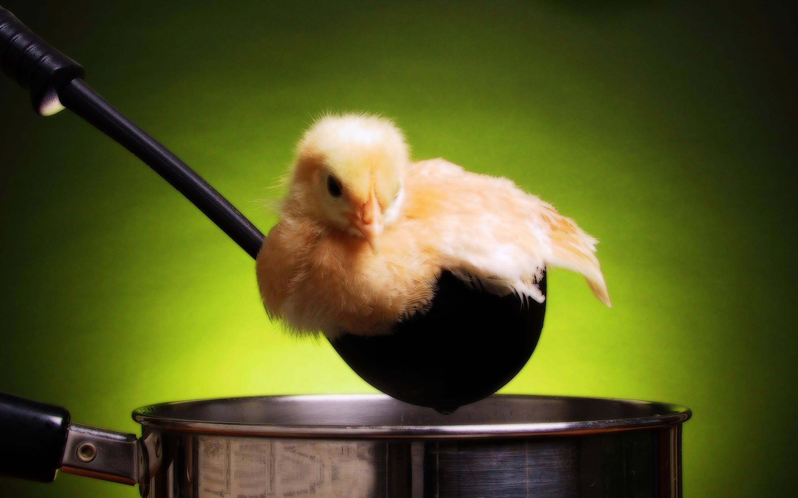 Цыпленок пареный.