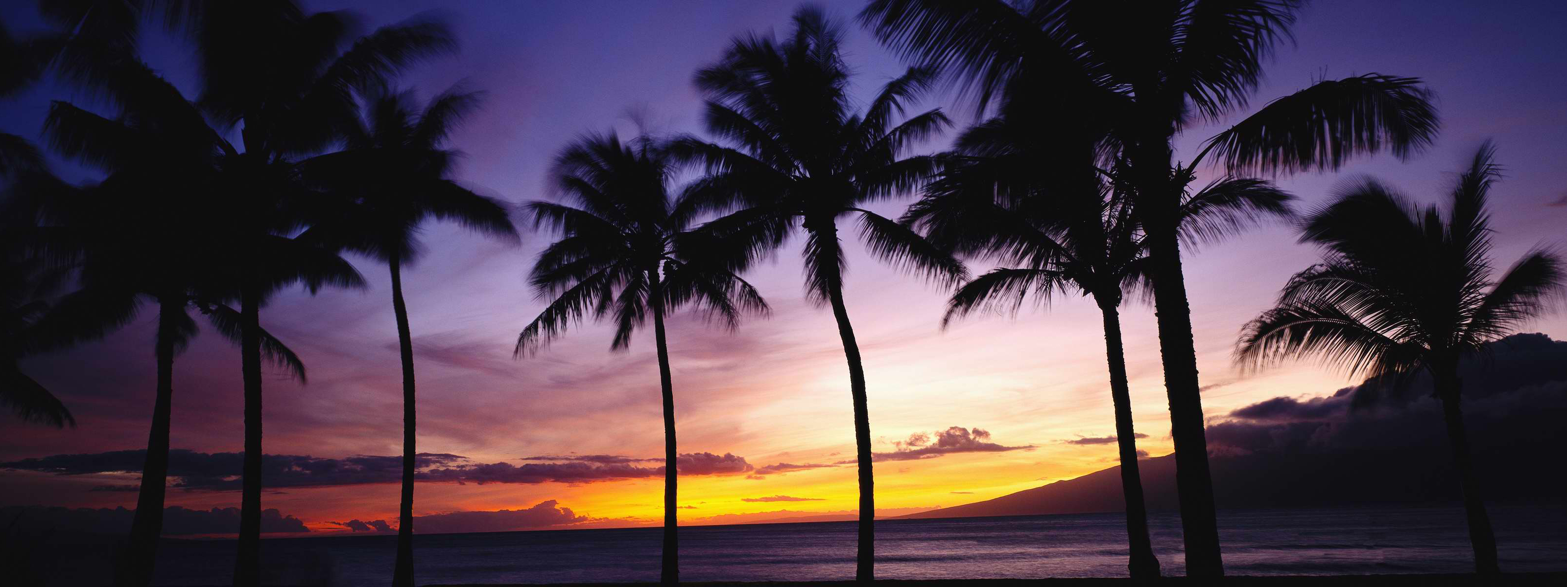 palms and sunset free desktop wallpapers for widescreen