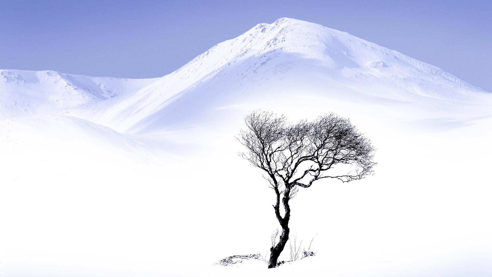 Winter Tree Cartoon Winter Tree