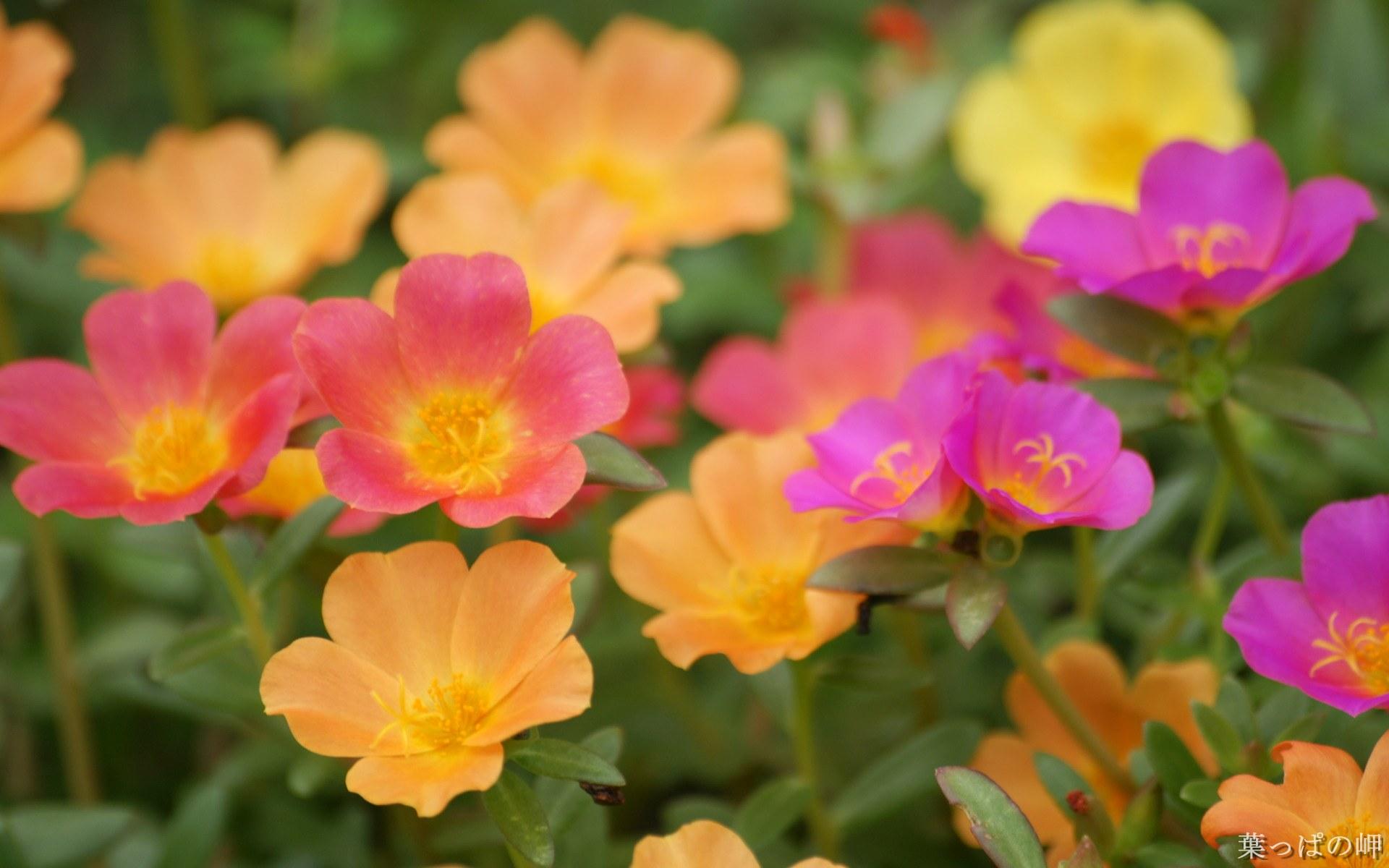 Обои фоны kru4inkaс цитатой цветы