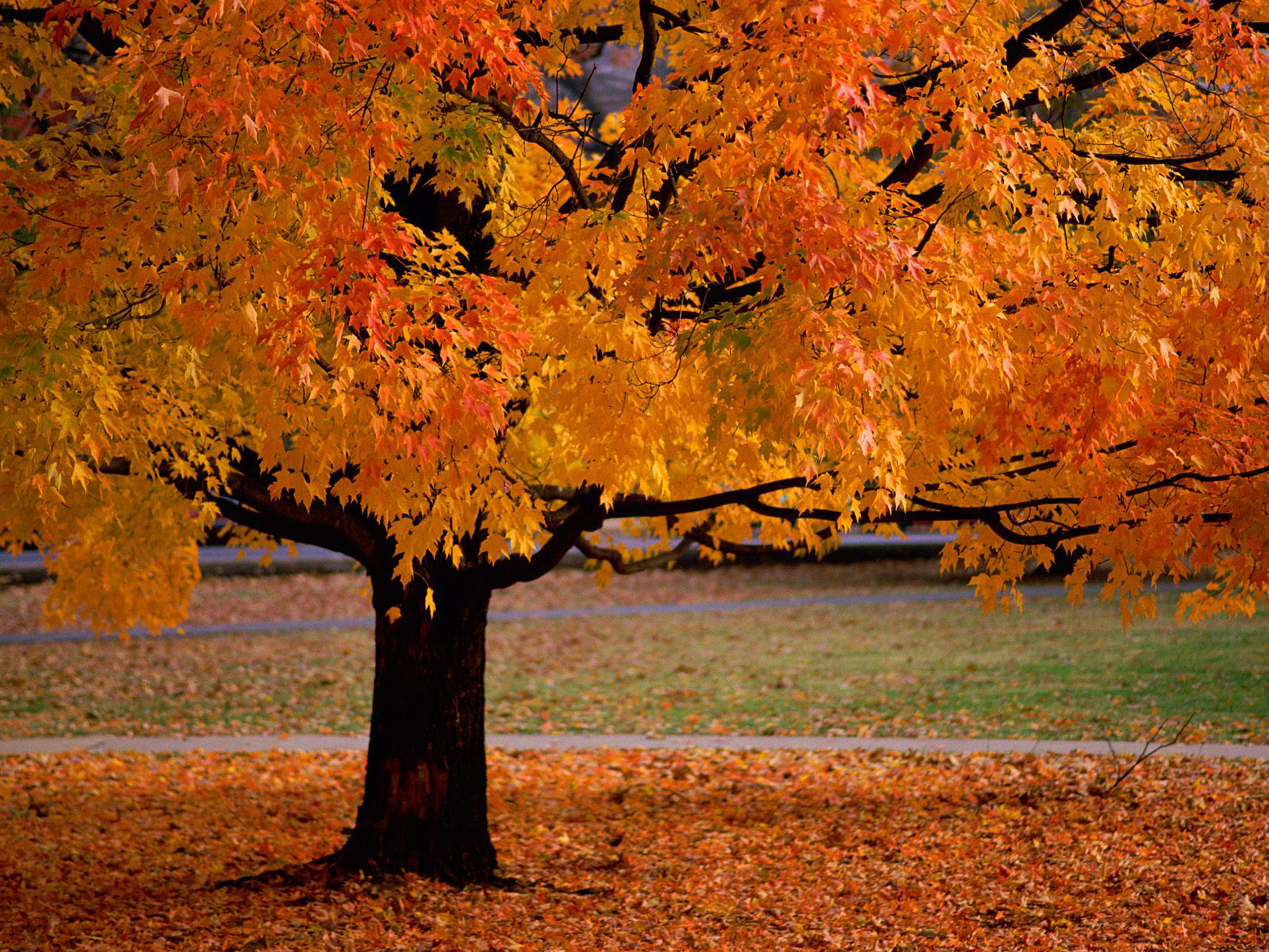 Reasons Why Autumn Is the Best Season