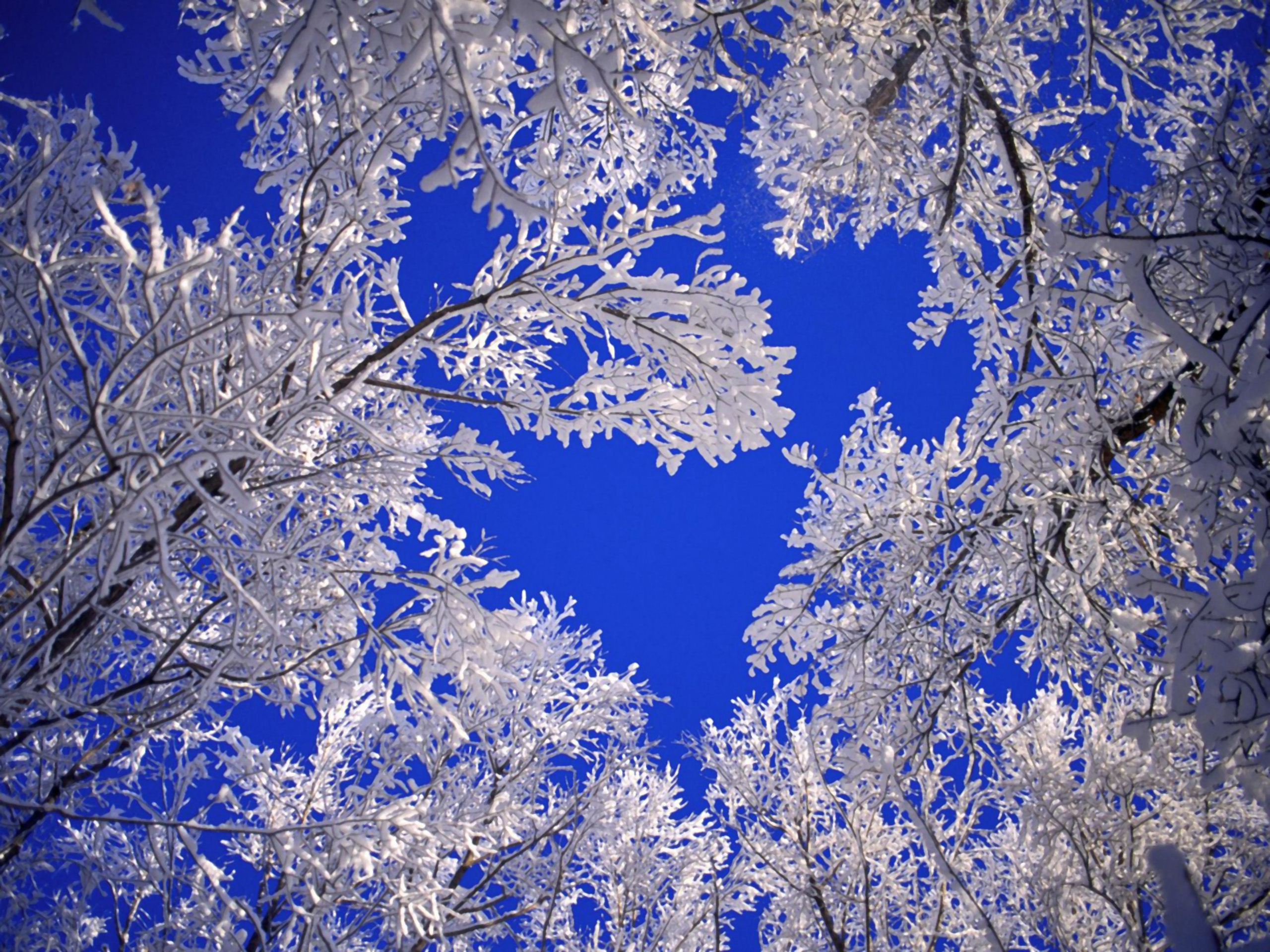 Скачати безплатно фото зими 12 фотография