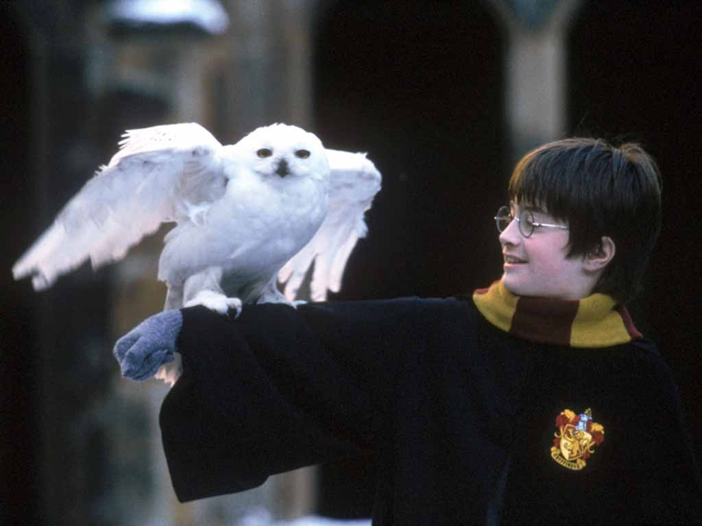 Must see Wallpaper Harry Potter Childhood - Harry-Potter-006  HD_15480.jpg