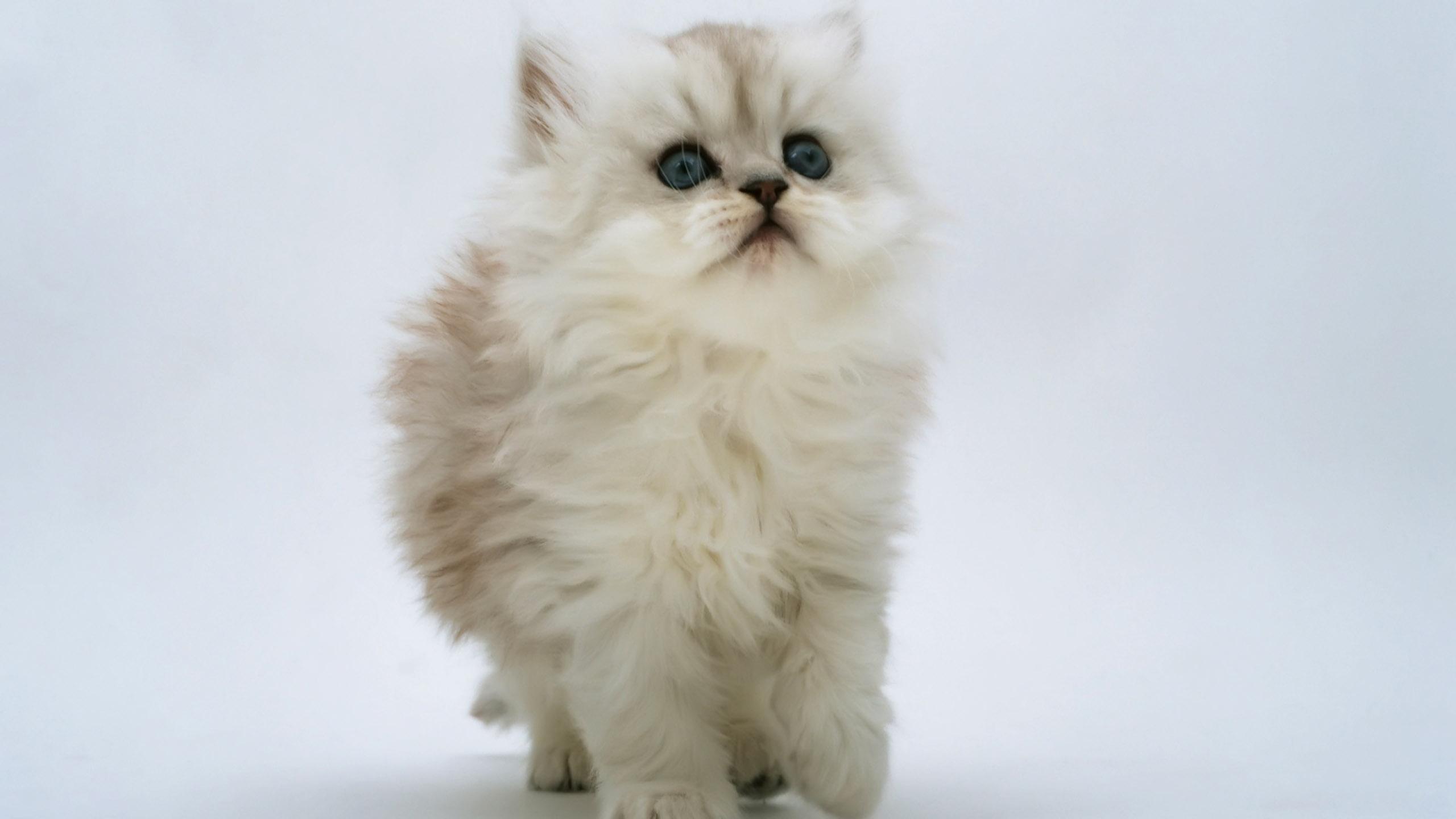 Фото клевых котят 15 фотография