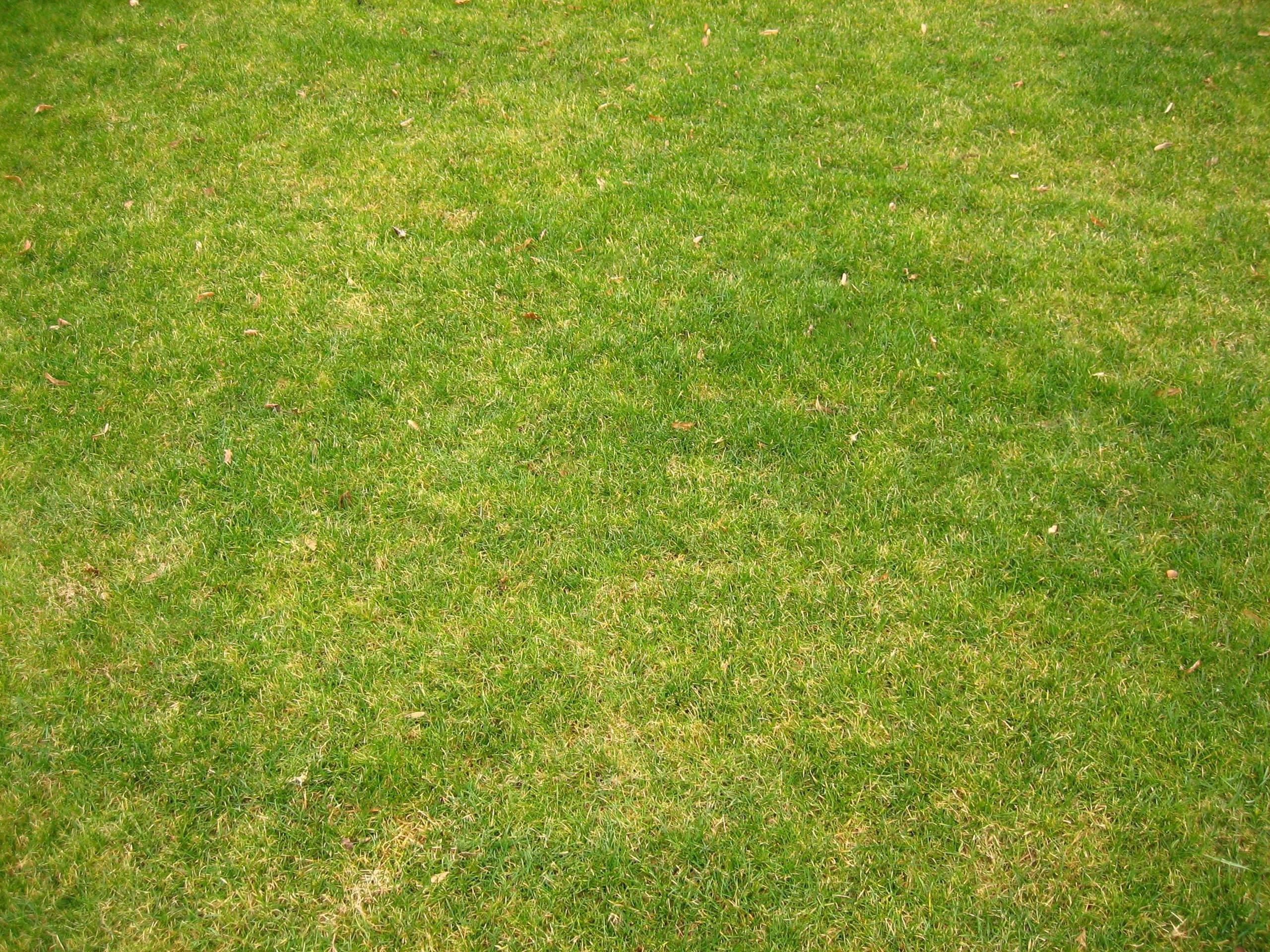 Grass for Grass landscape