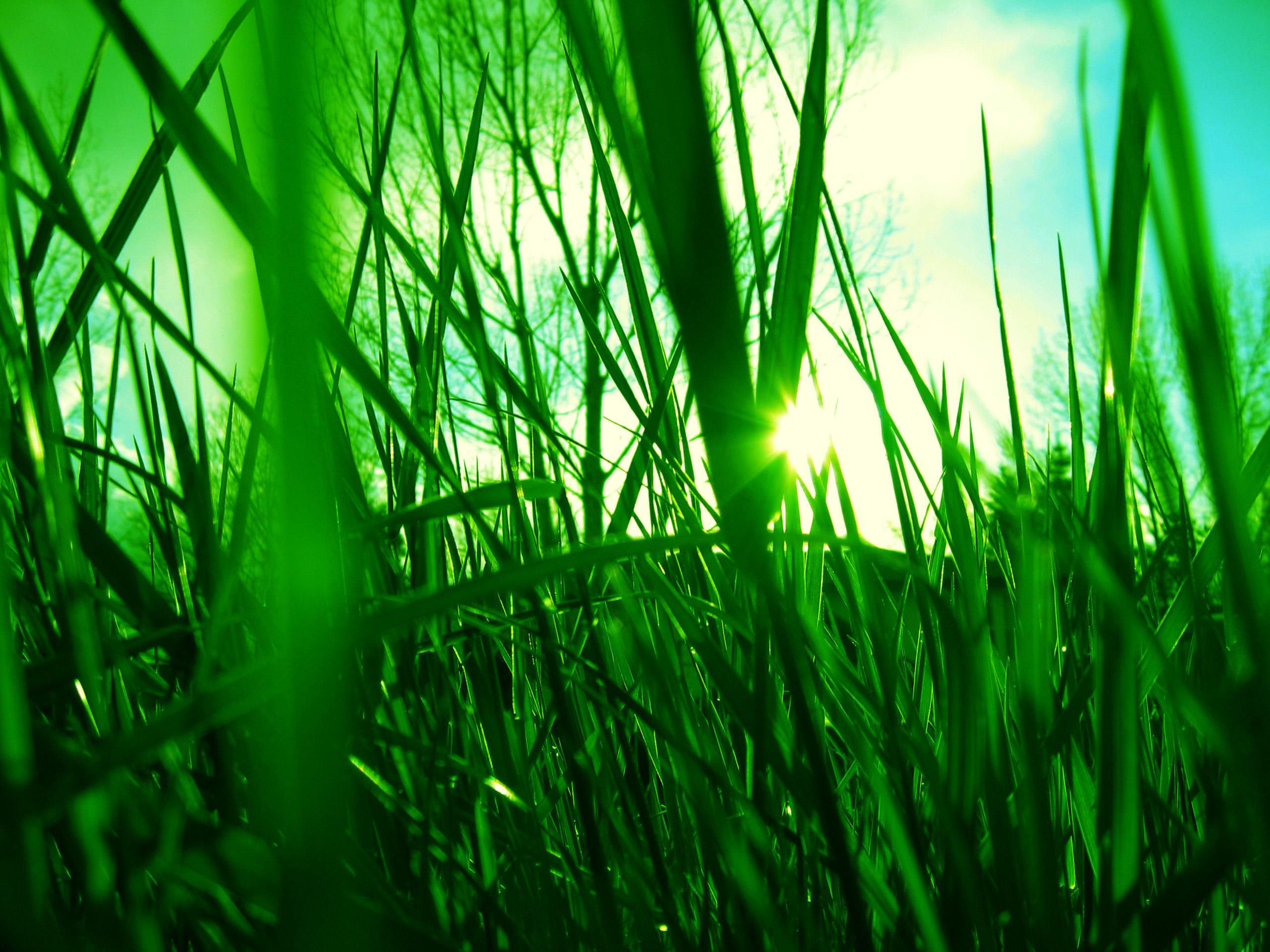 Зеленые растения в лучах солнца без смс