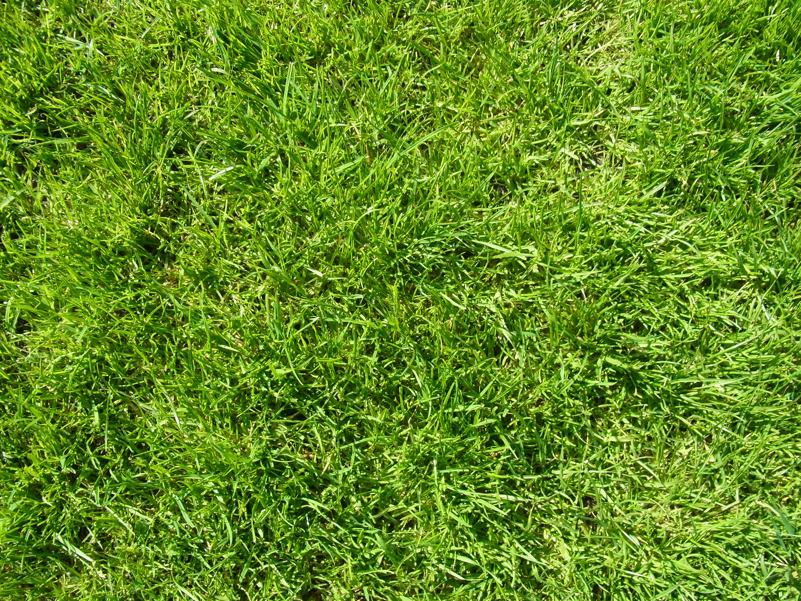 Nature S Lawn Norcross Ga