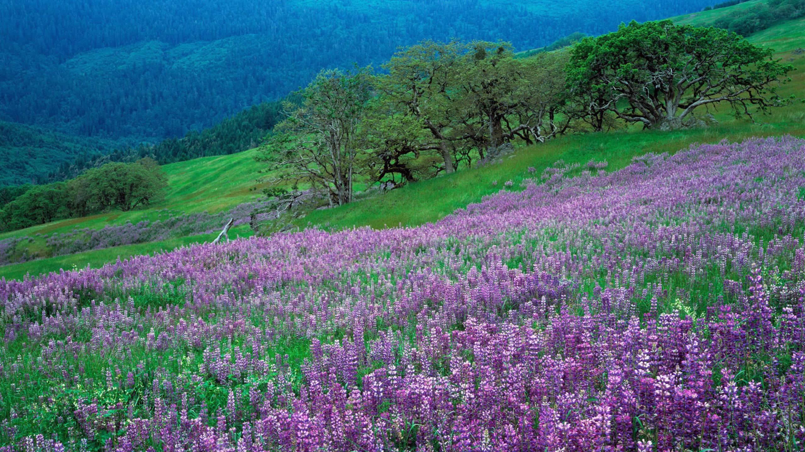 природа цветы фиолетовые трава nature flowers purple grass без смс