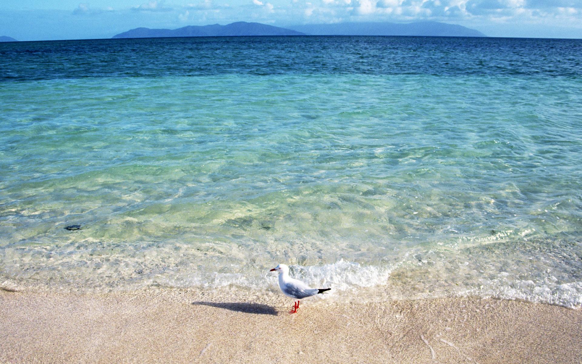 Чайка на песке бесплатно