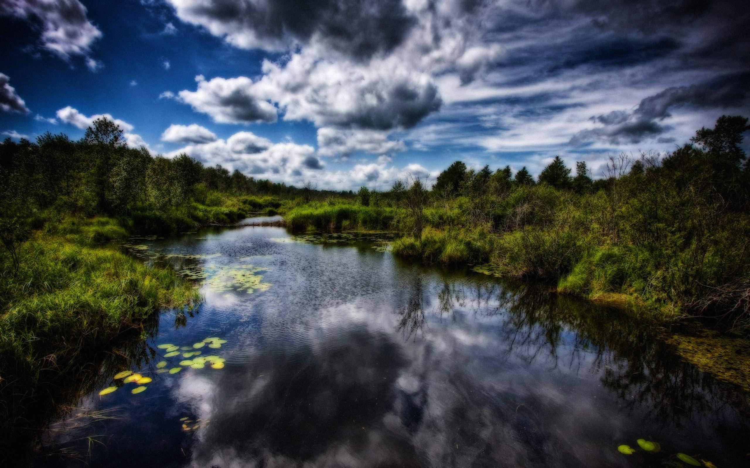 кувшинки озеро небо лес  № 1264661 бесплатно