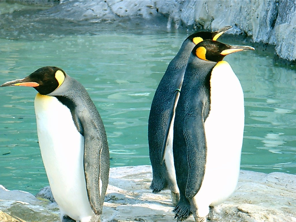 penguins dating Penguin's best free dating site 100% free online dating for penguin singles at mingle2com our free personal ads are full of single women and men in penguin looking for serious relationships, a little online flirtation, or new friends to go out with.