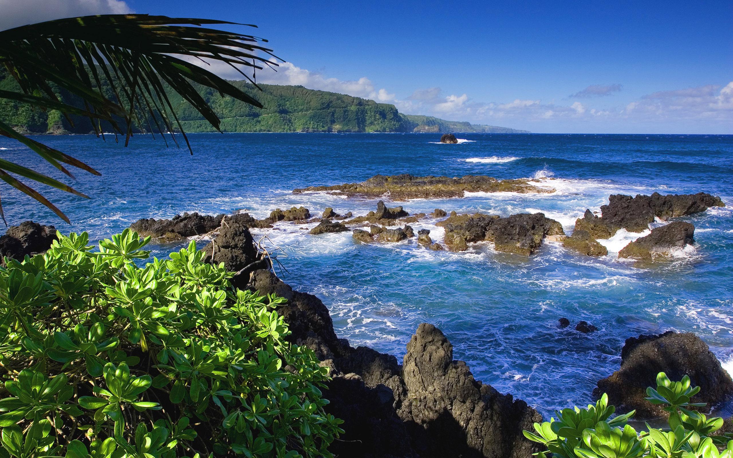 море, пляж, растительность бесплатно