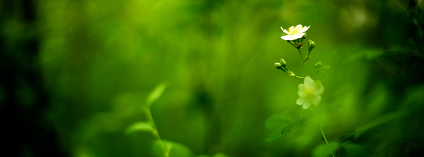 Grass Nature For Facebook Covers | Free Desktop Wallpapers ...