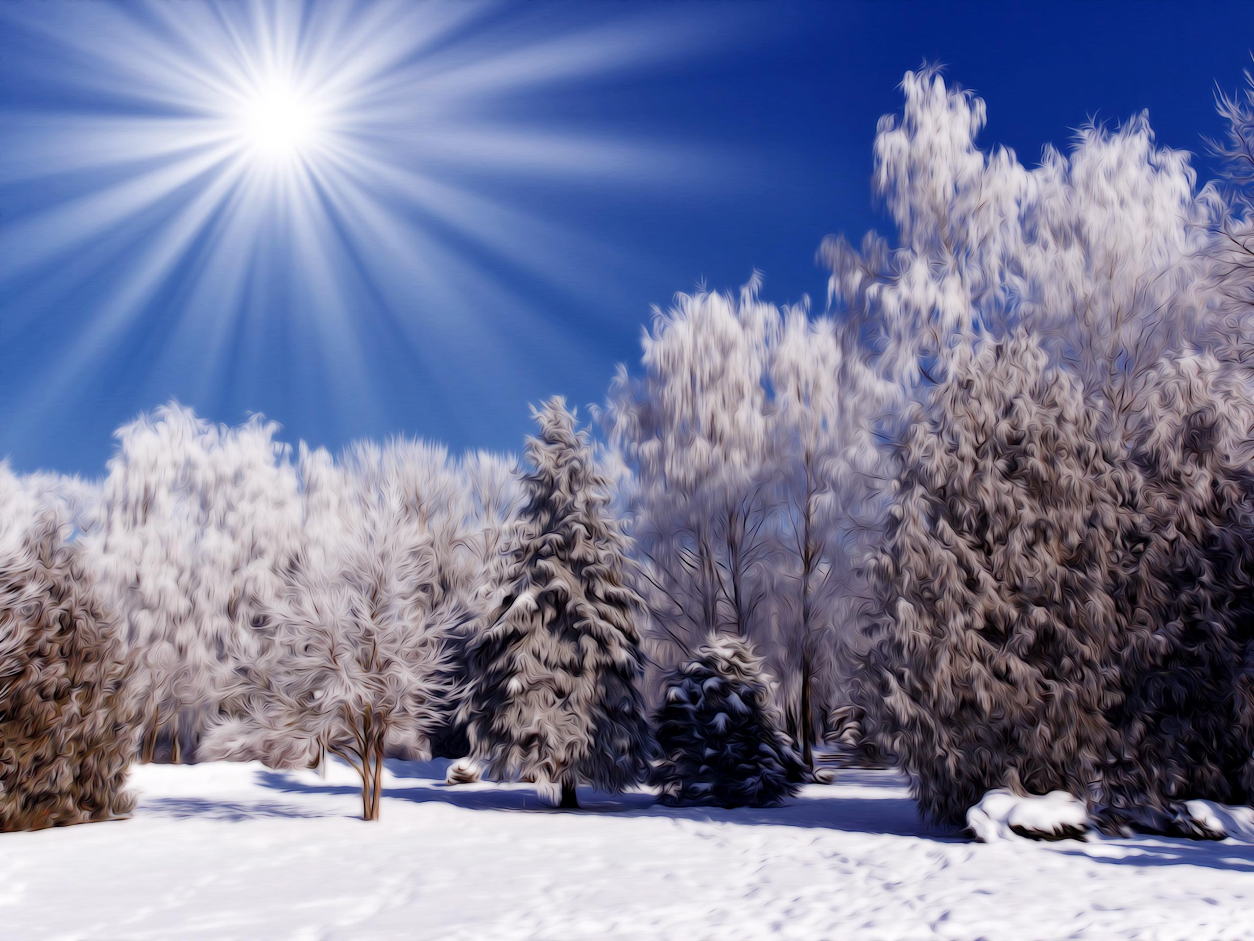 Картинка на рабочий стол на тему иней, солнце, лес, деревья, снег