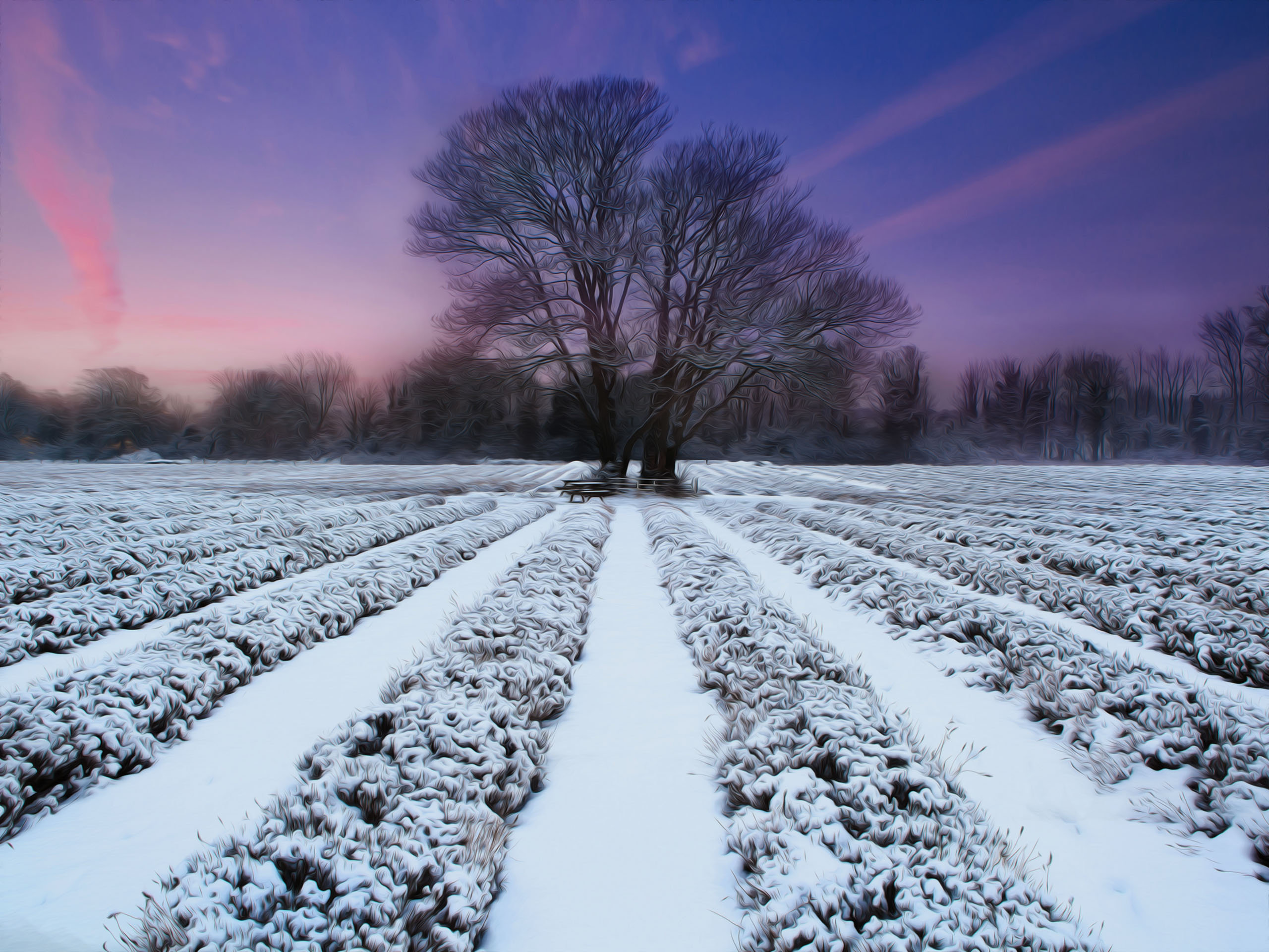 Снег деревья поле без смс
