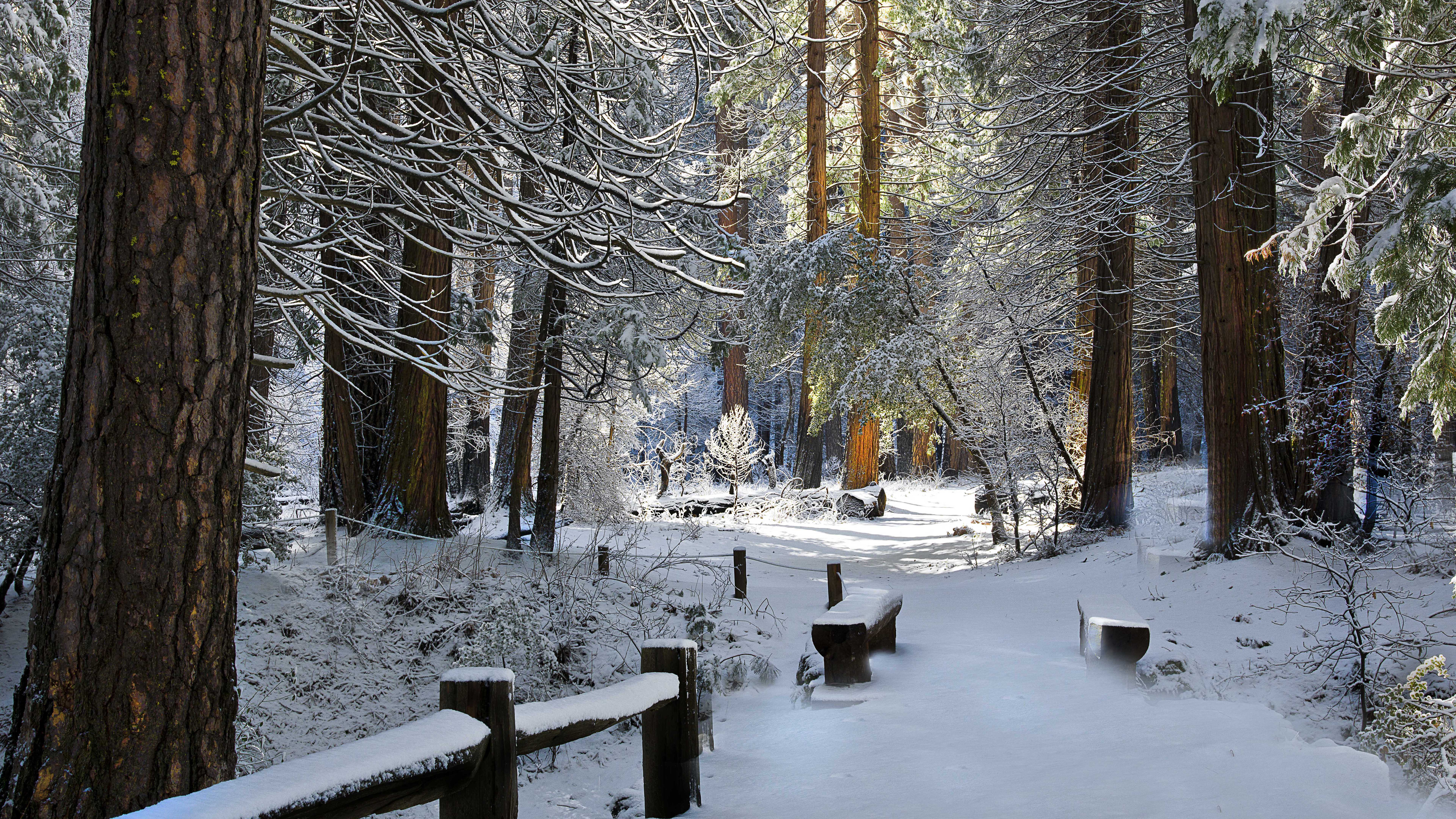 2 Winter Forrest | Free Desktop Wallpapers for Widescreen ...