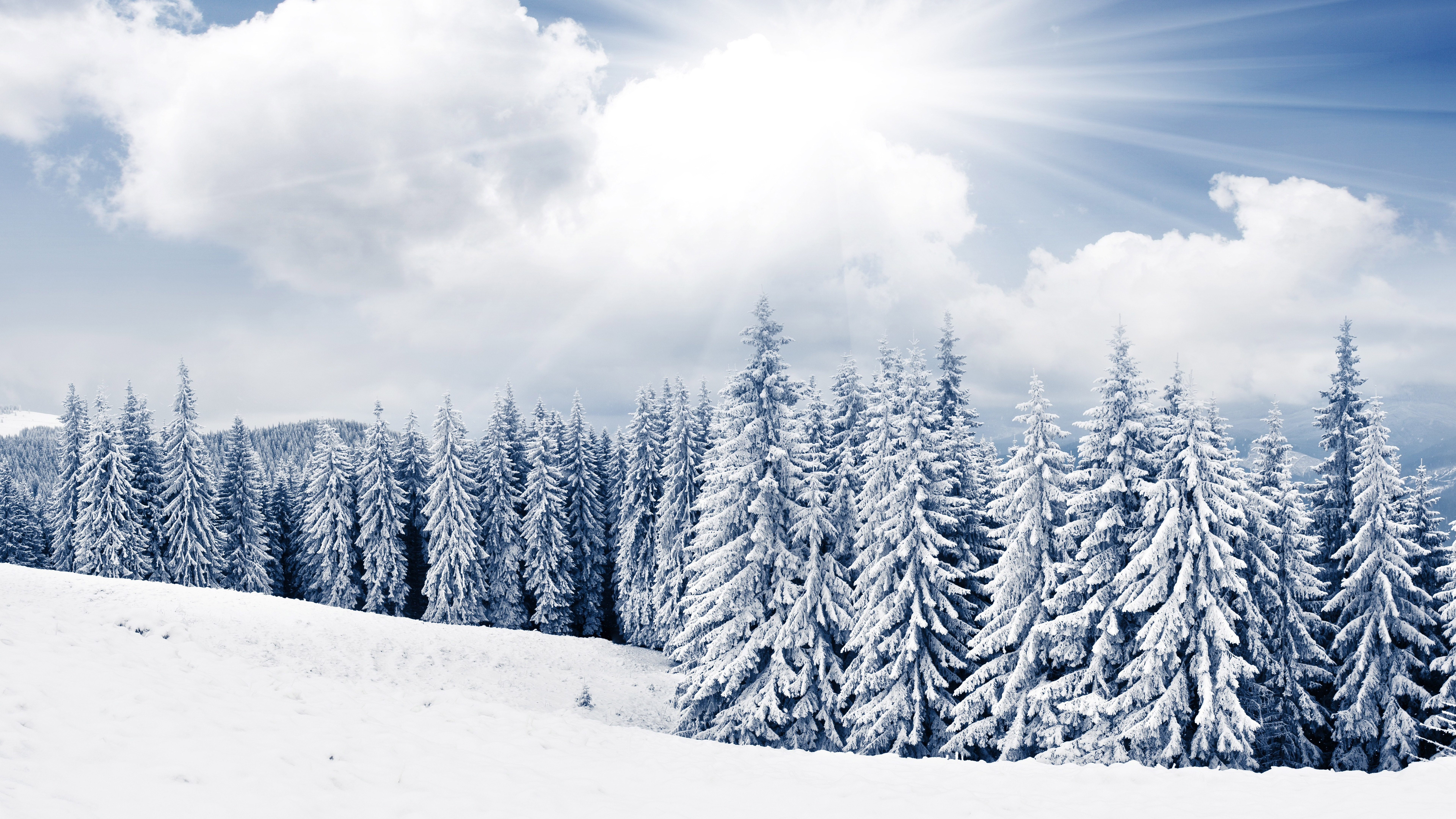 2 winter tree and snow free desktop wallpapers for