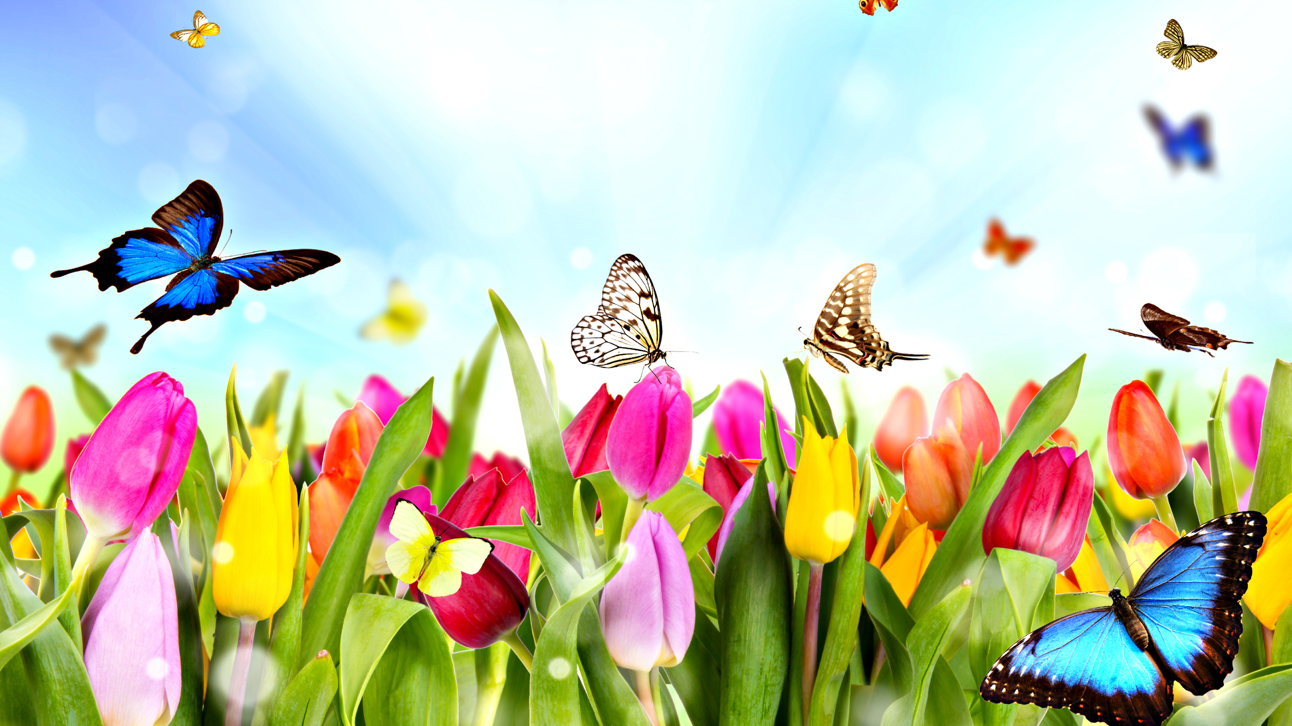 Nature Spring Free Desktop Wallpapers For Widescreen Hd