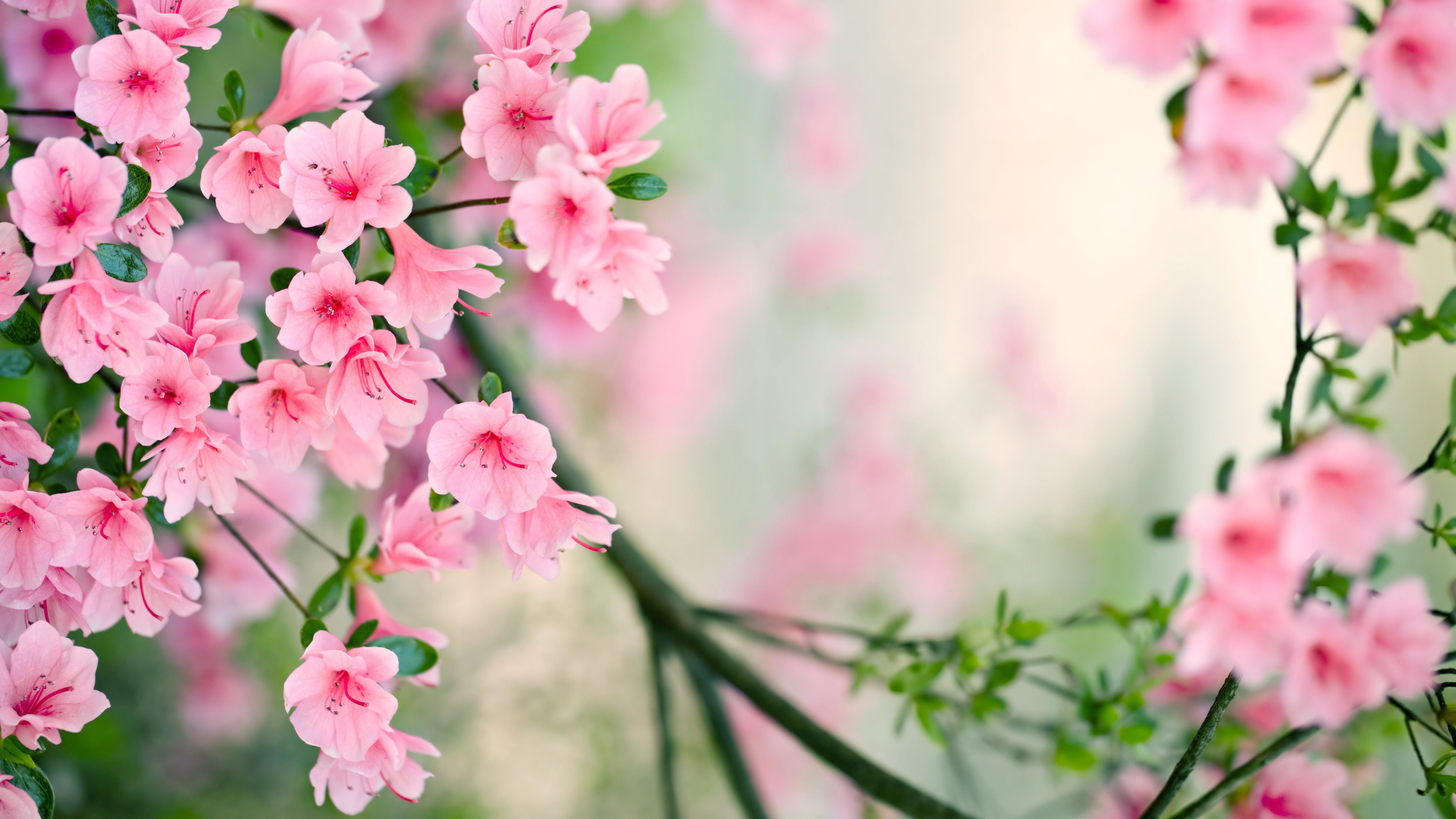 Nature Spring   Free Desktop Wallpapers for Widescreen, HD ...